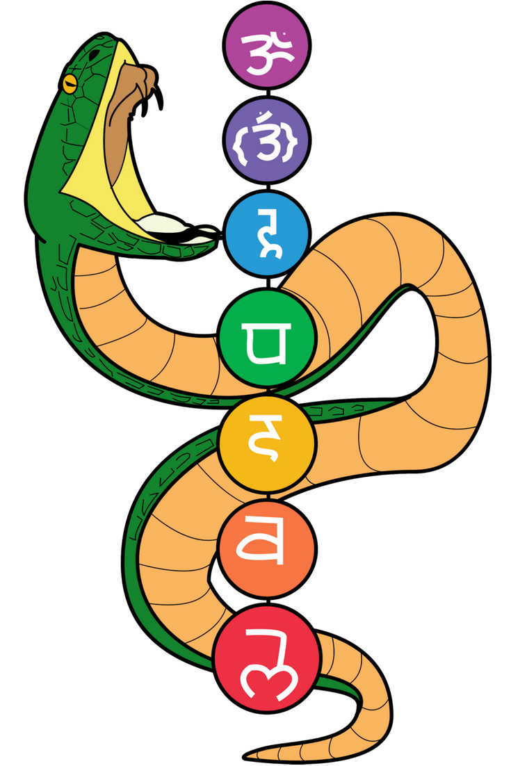 The Chakra Snake, the Kundalini Serpent, has a significant meaning. Learn more!